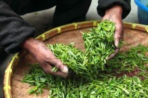 white tea natural toner