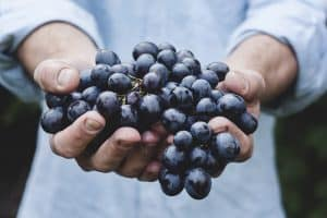 Grape Seed Extract Antiviral